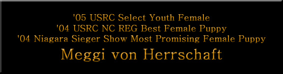 USRC Select Youth Female, USRC NC REG Best Female Puppy, Niagara Sieger Show Most Promising Female Puppy, V1 Rated